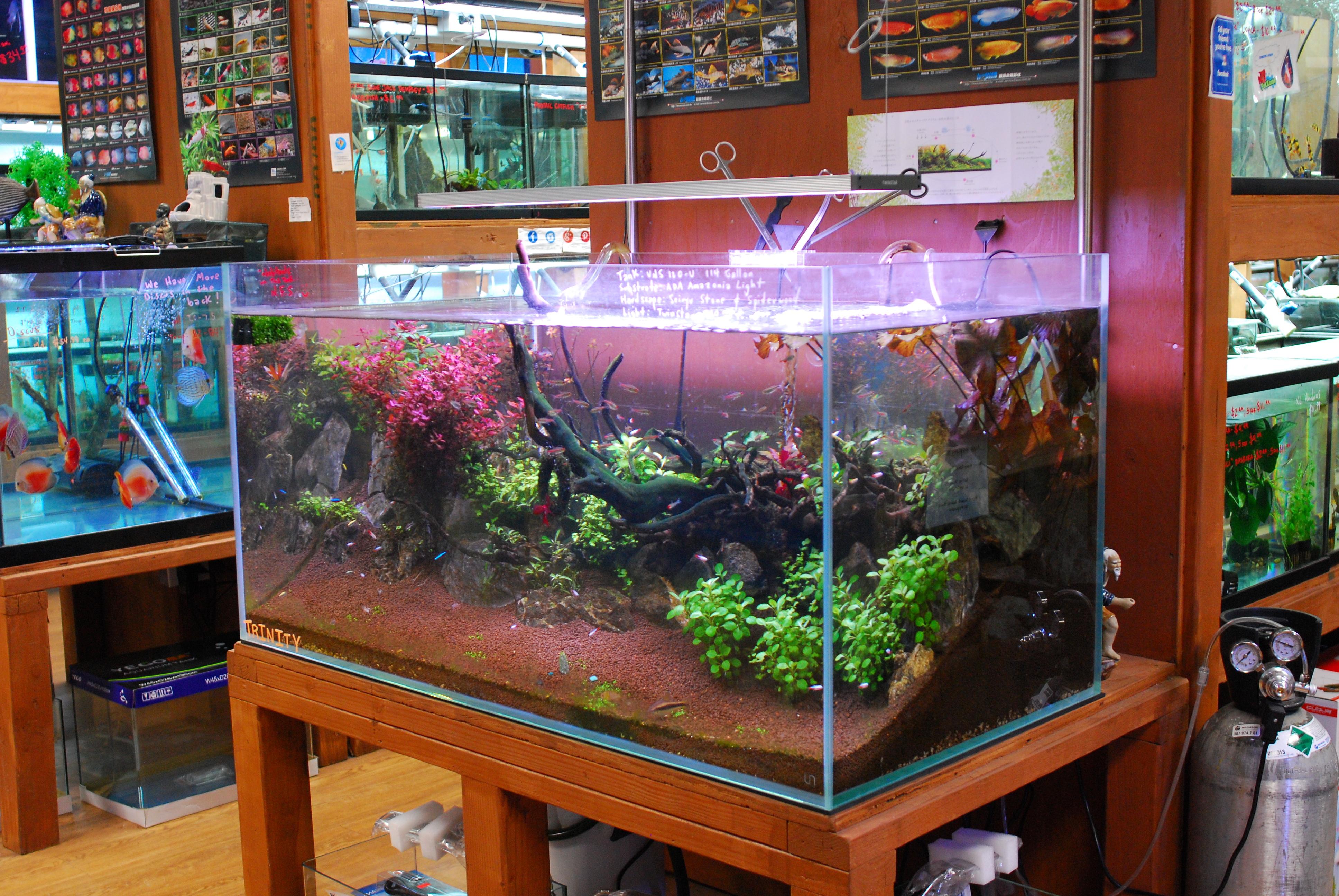 Aquascaping Tank Build Updates Pet Zone Tropical Fish